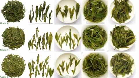 Green Tea Grading Chart
